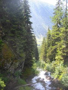 """Départ de la randonnée au """"lac blanc"""" à travers les sapins."""