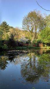 reflet d'un arbre dans l'étang dans le jardin de Claude Monet