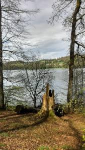 souche au bord du lac des Settons