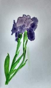 Iris Aquarelle Pascale Coutoux