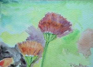 Aquarelle- carte fleur pascale coutoux