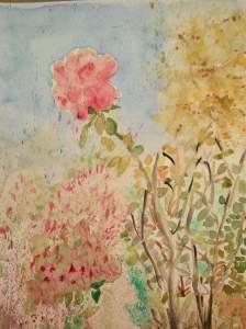 rose de mon jardin 1_o