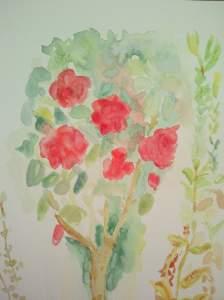 """Aquarelle """"rosier de mon jardin"""" pascale coutoux"""