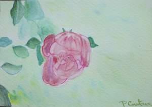 carte fleur rose rose8_o