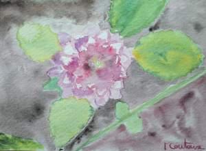 carte fleur5_o