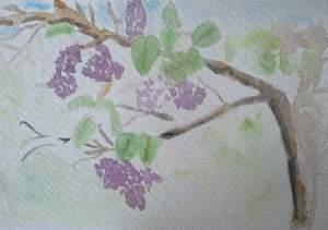 carte postale fleur de printemps lilas