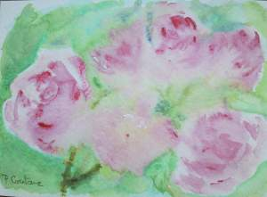 carte postale roses roses