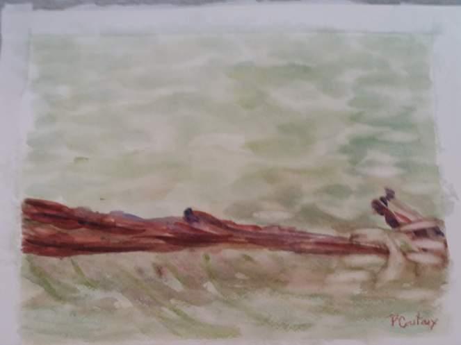 le lac Vallon branche d'arbre