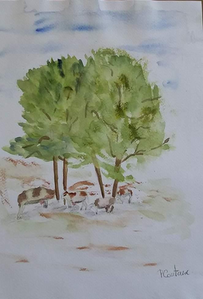 Vaches sous un arbre à la plaine de joux
