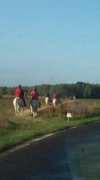 chevaux en ballade dans les champs