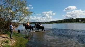 tivo regarde les chevaux noirs dans la loire
