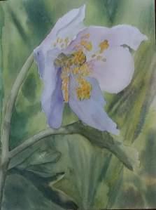fleur blanche aquarelle