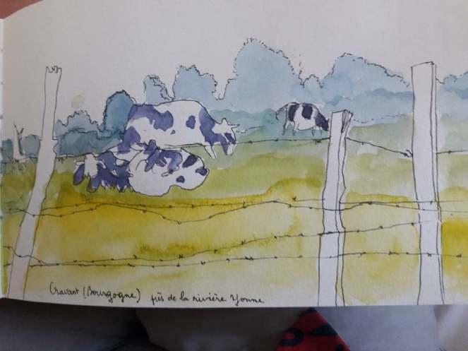 dessin de vaches sfriedel cravant