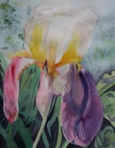 iris jaune et violette aquarelle redim